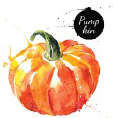 Pumpkin. Hand drawn watercolor painting on white background. Vec