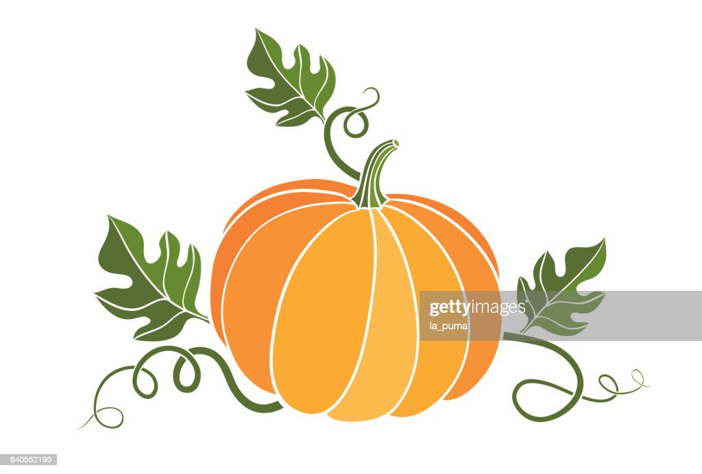 pumpkin. harvesting. natural food. colored vector illustration on white
