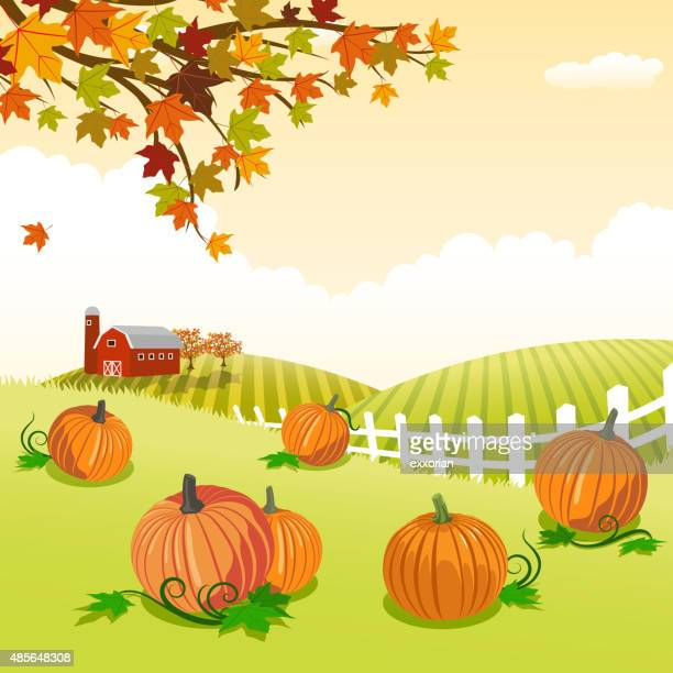 pumpkin patch - harvesting stock illustrations