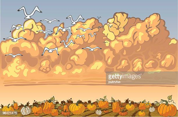 126 Pumpkin Patch High Res Illustrations Getty Images
