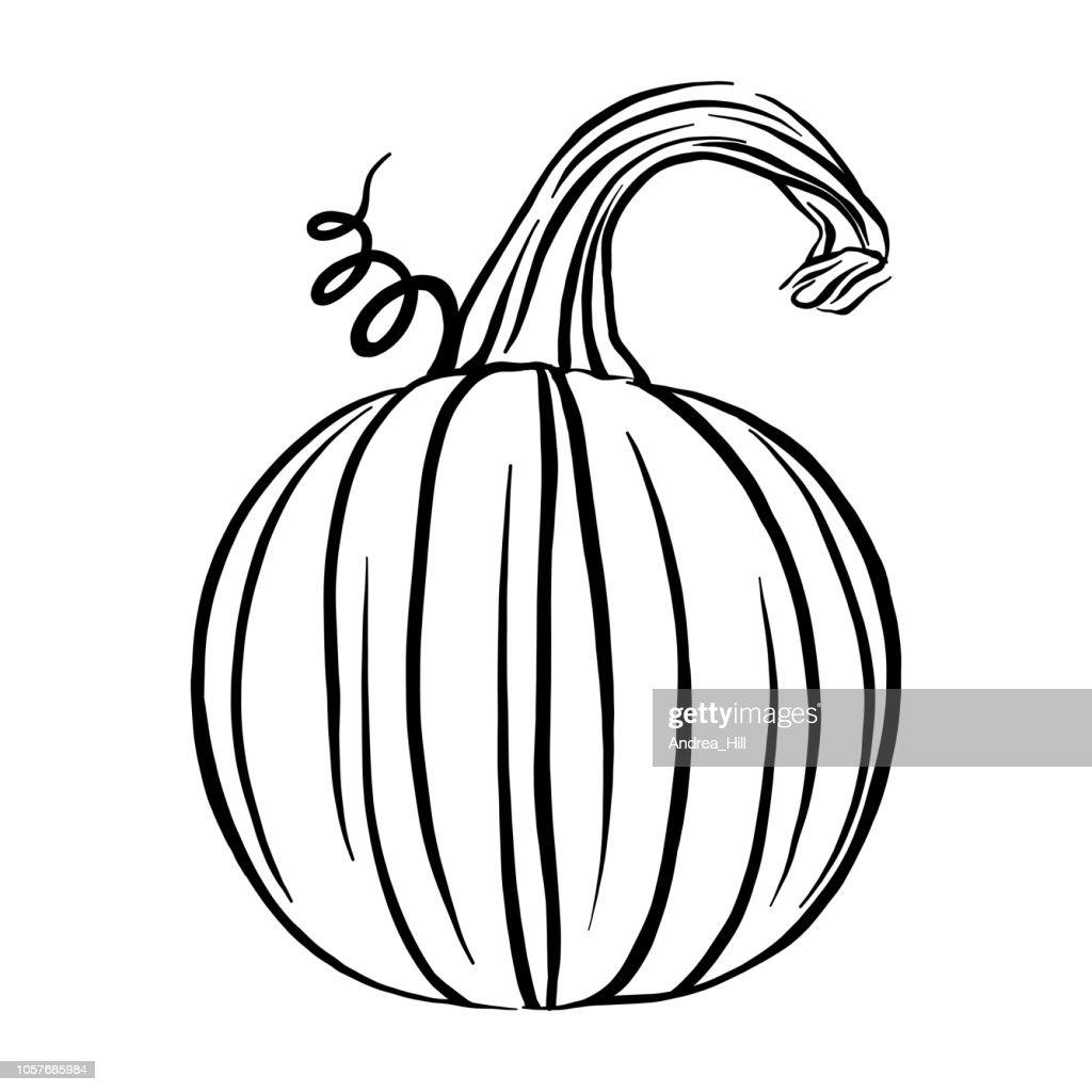 Pumpkin Sketch Vector Illustration
