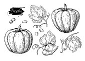 Pumpkin vector drawing set. Isolated hand drawn object with slic