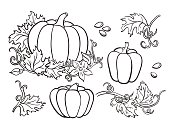 Pumpkin vector drawing set. Isolated outline  vegetable, plant,