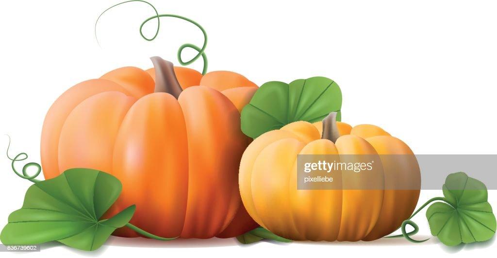 pumpkins plant vector