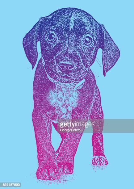 ilustraciones, imágenes clip art, dibujos animados e iconos de stock de cachorro rescatado de houston después de huracán harvey. mezcla de pit bull terrier. - pit bull terrier