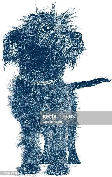 Welpen, die darauf warten, angenommen werden. Terrier Dackel Mischlingshund.