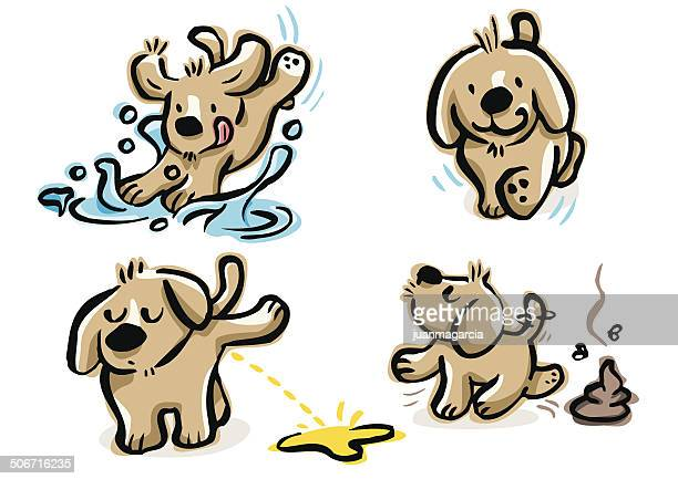 puppy walking, doing pee, poop and jumping over a puddle - urine stock illustrations
