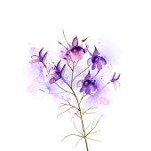 purple field flower
