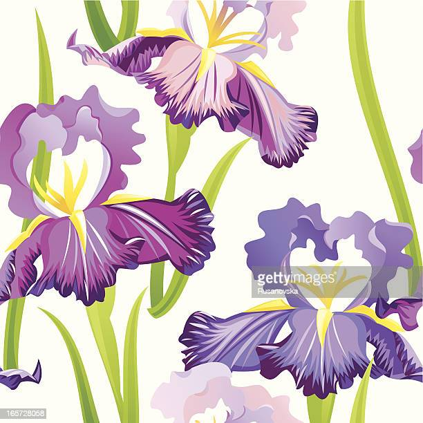 Purple Irises Pattern