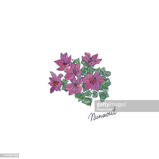 Saxifrage High Res Illustrations - Getty Images  Purple Saxifrage Drawing