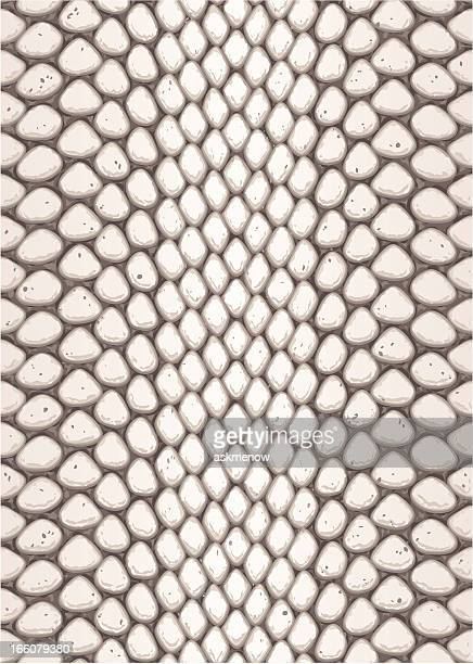 python skin - animal scale stock illustrations, clip art, cartoons, & icons