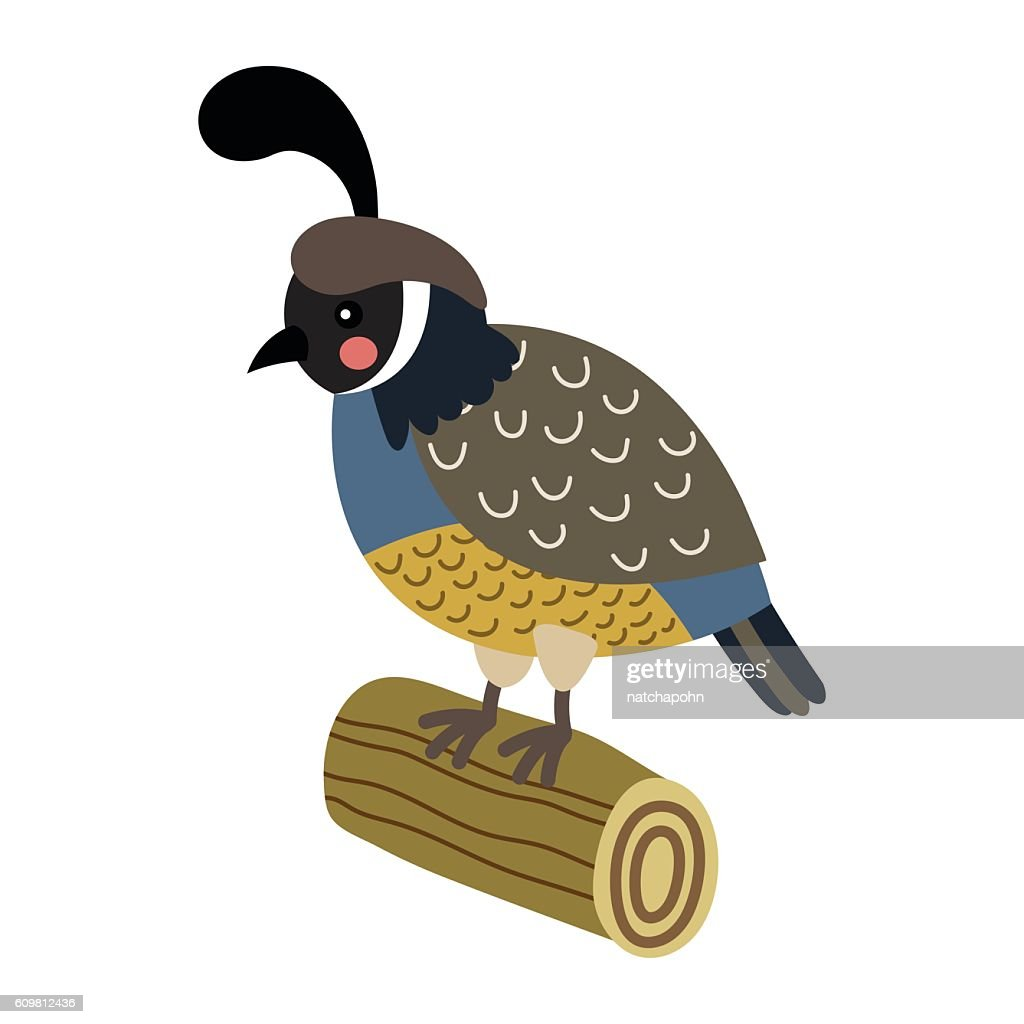 Quail perching on wood log animal cartoon character vector illustration.