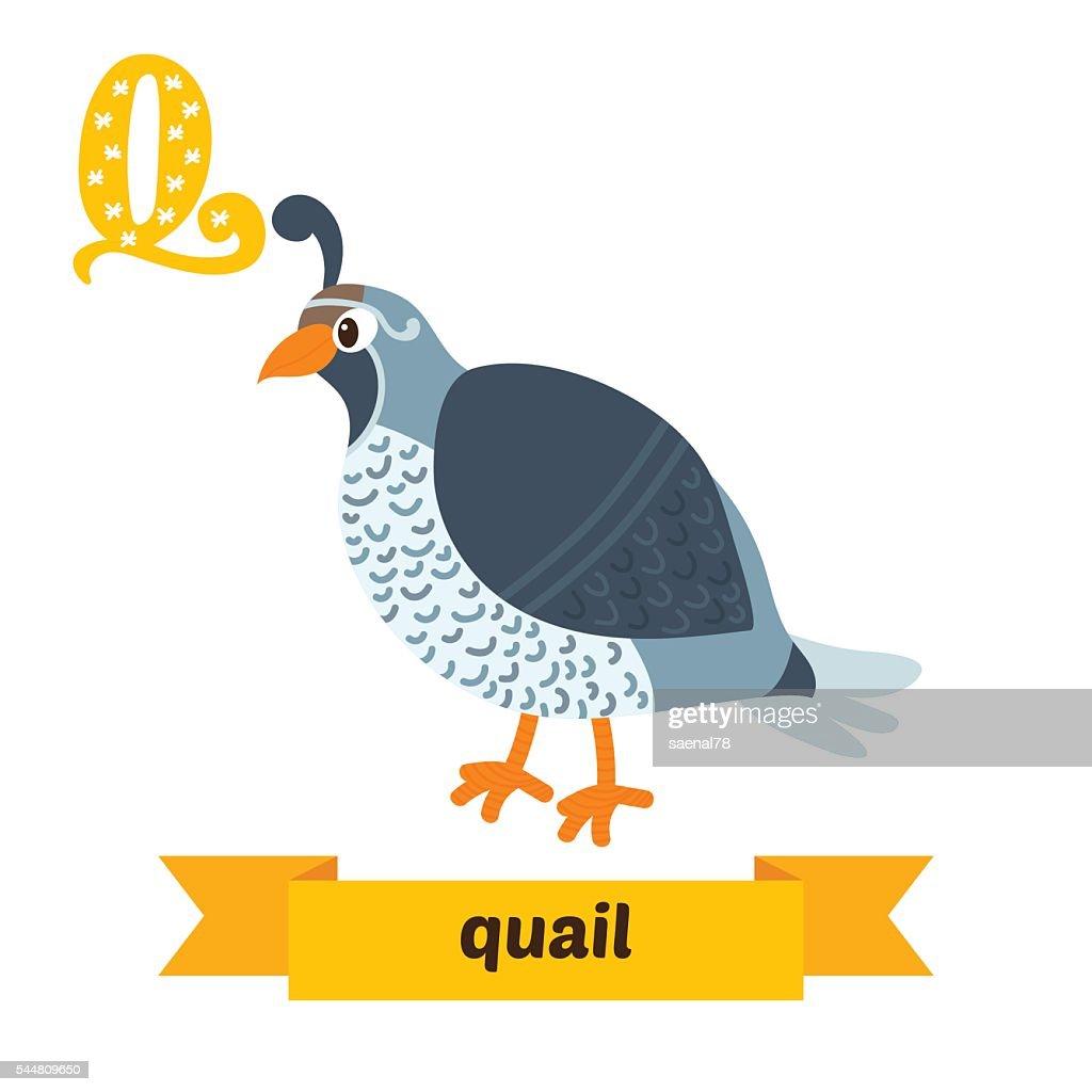 Quail. Q letter. Cute children animal alphabet in vector. Funny