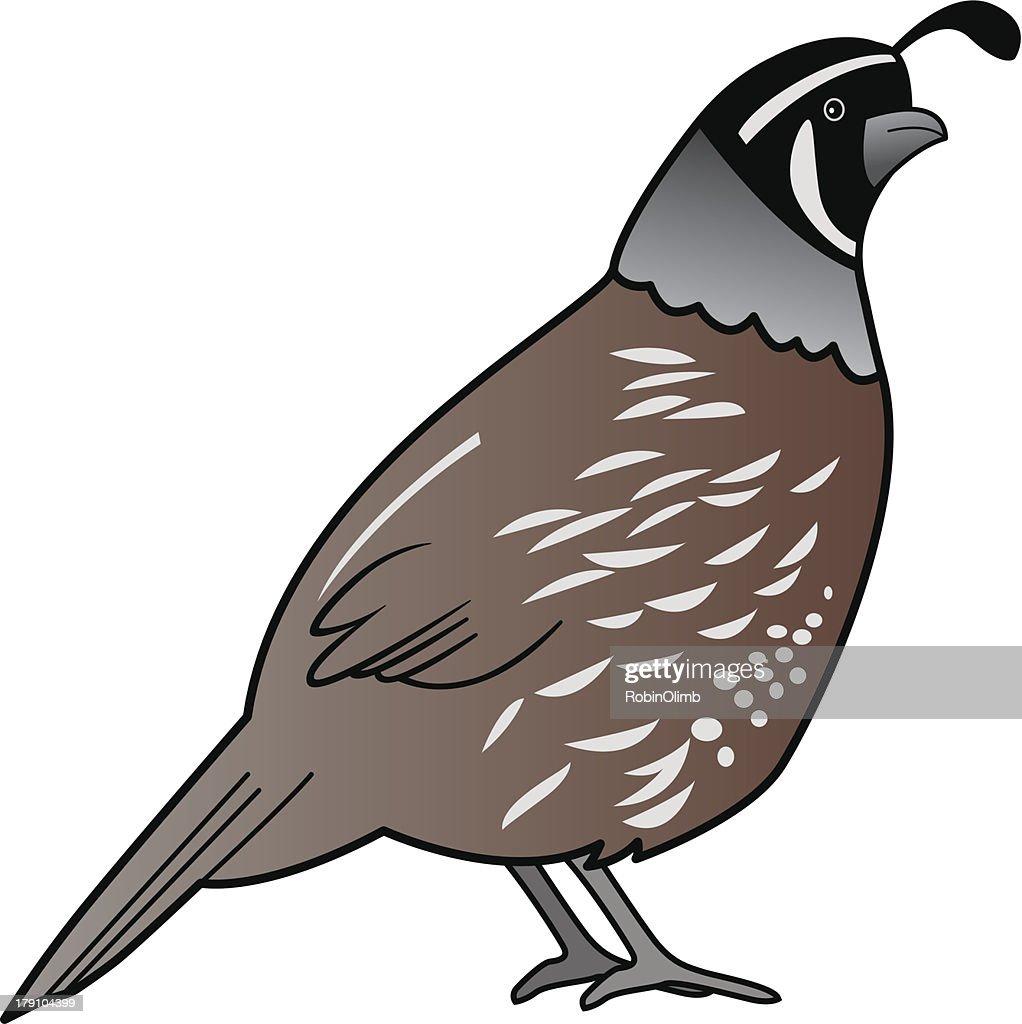 quail clip art free vector quail 1 graphics clipart me rh clipart me california quail clipart quail clipart