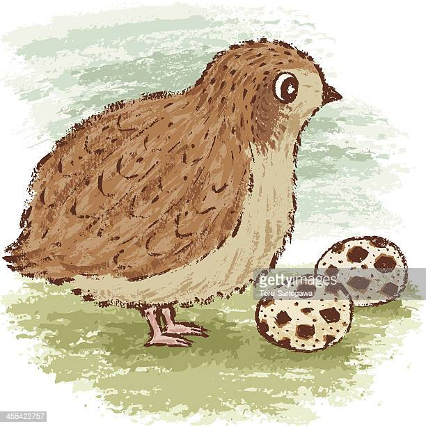 quail - quail bird stock illustrations, clip art, cartoons, & icons