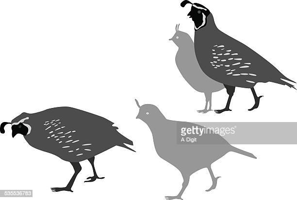 quailfamily - quail bird stock illustrations, clip art, cartoons, & icons