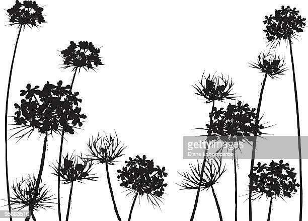 queen anne's lace flower horizonal black silhouette - wildflower stock illustrations, clip art, cartoons, & icons