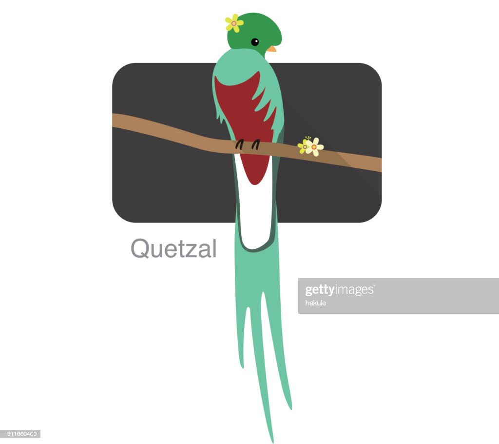 Quetzal bird standing on a branch, some flower on its head, vector illustration