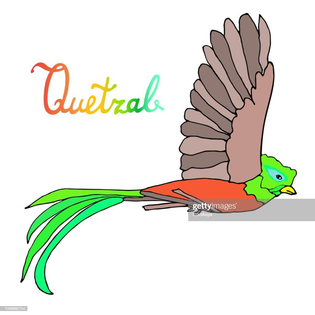 Quetzal burds. Flying quetzal bird and sitting queztal bird. Quetzal with respleded wings, Hand drawn artistic sketch illustration