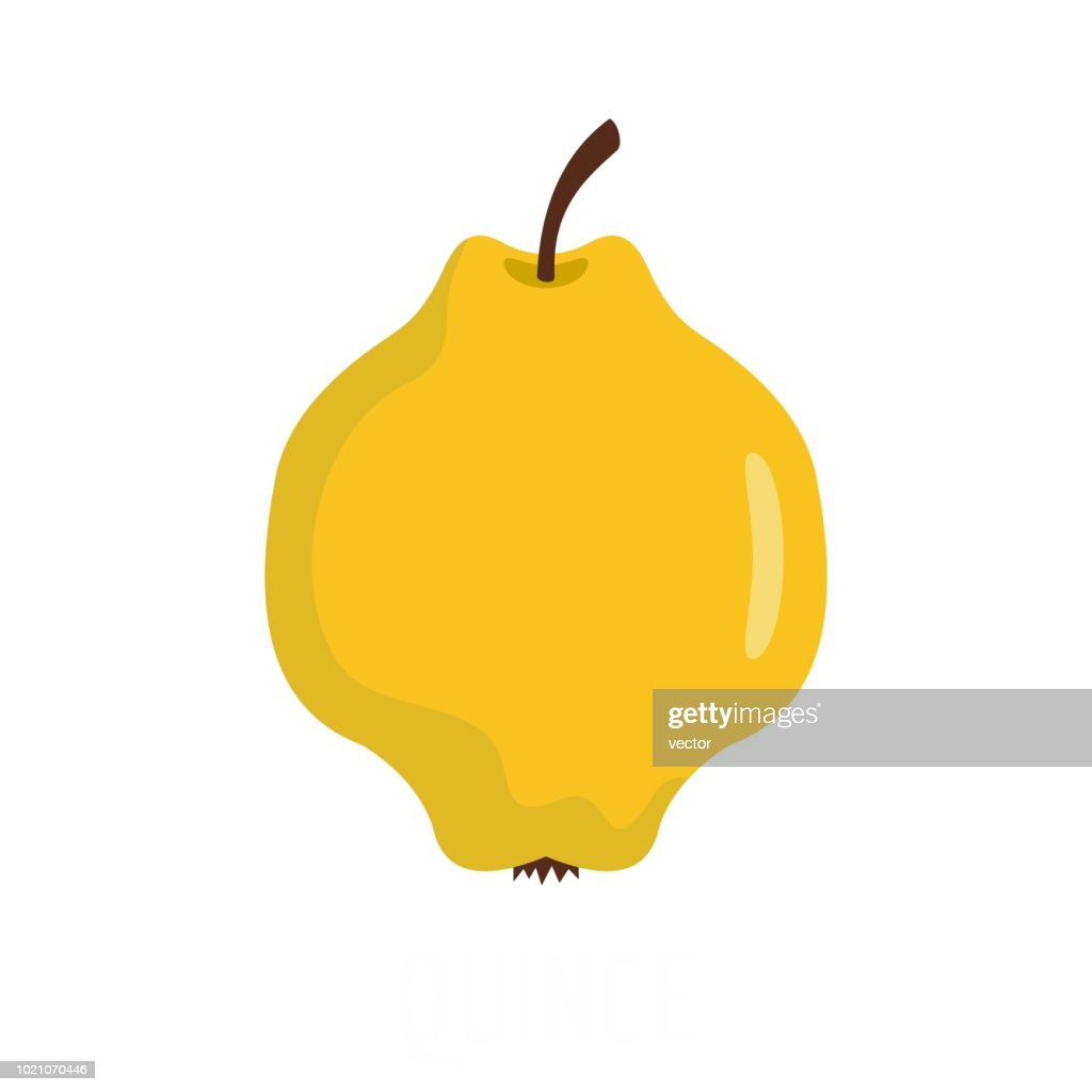 Quince icon, flat style