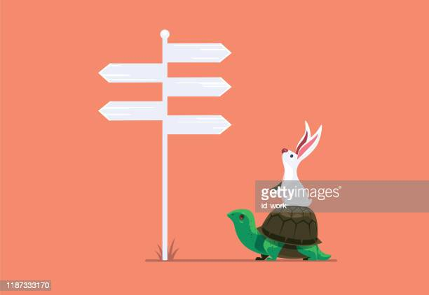 rabbit and tortoise finding direction - turtle stock illustrations