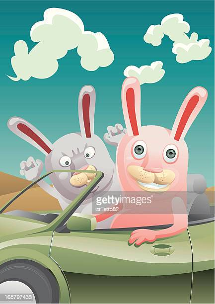 Rabbit Driving
