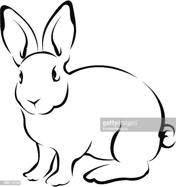 illustrations, cliparts, dessins animés et icônes de lapin - lapereau