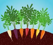 Rainbow Carrots Illustration. Growing vegetables.
