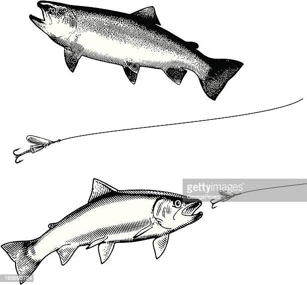 78983c969955b 60 Top Trout Fishing Stock Illustrations