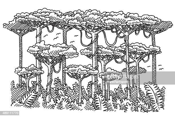 rainforest trees drawing - rainforest stock illustrations, clip art, cartoons, & icons