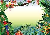 Rainforest Tropical Border