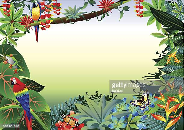 illustrations, cliparts, dessins animés et icônes de frontière de la forêt tropicale - jungle
