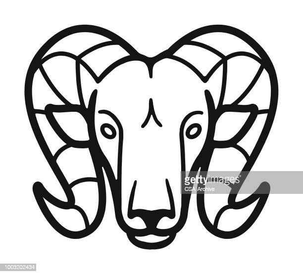 illustrations, cliparts, dessins animés et icônes de ram - ram animal