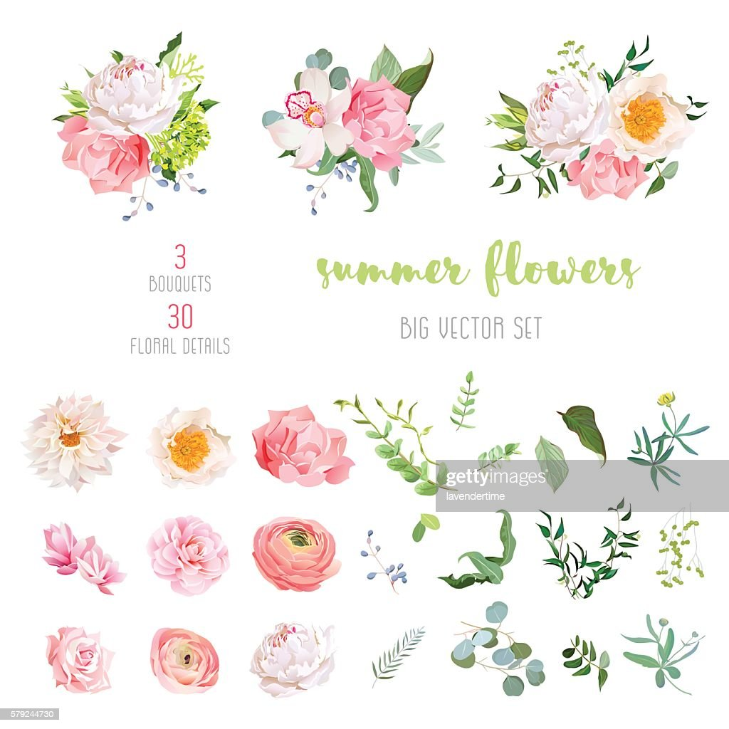 Ranunculus, rose, peony, dahlia, camellia, carnation, orchid, hydrangea vector collection