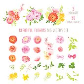 Ranunculus, rose, peony, narcissus, orchid flower big vector collection