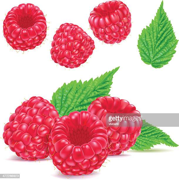 raspberries - raspberry stock illustrations