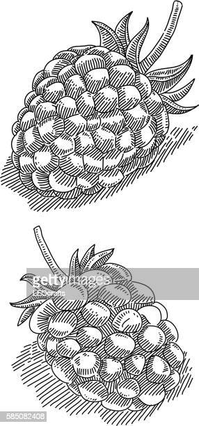 Raspberry and Blackberry Drawing