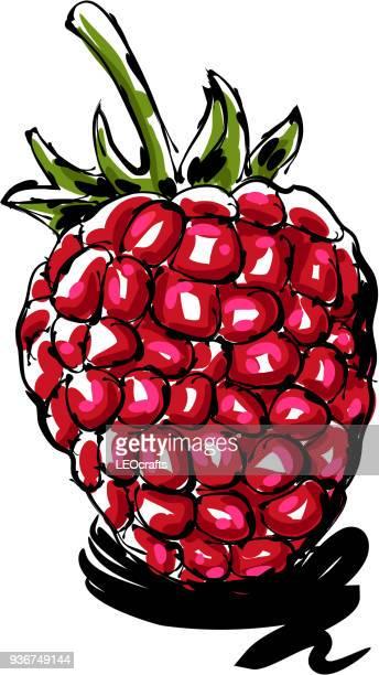 raspberry drawing - raspberry stock illustrations, clip art, cartoons, & icons