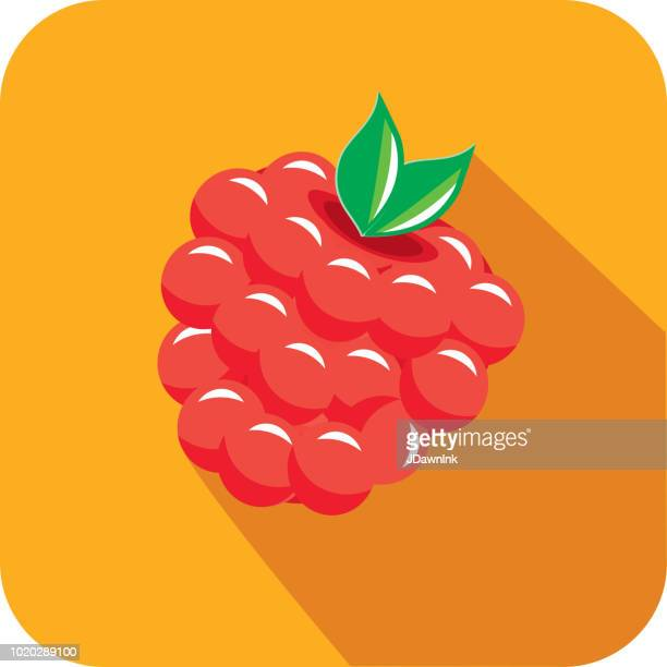 raspberry fruit flat design themed icon with shadow - raspberry stock illustrations, clip art, cartoons, & icons