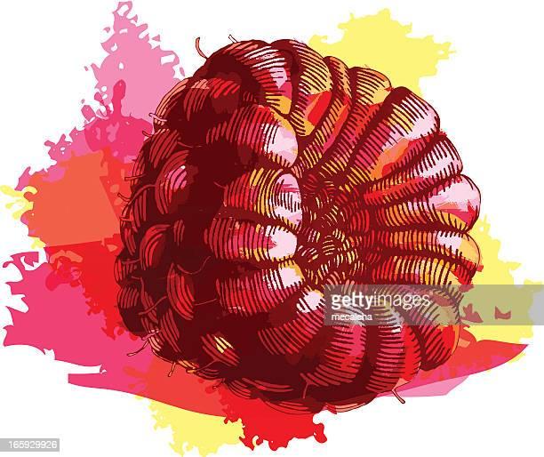 raspberry - raspberry stock illustrations, clip art, cartoons, & icons