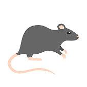 rat Flat Design
