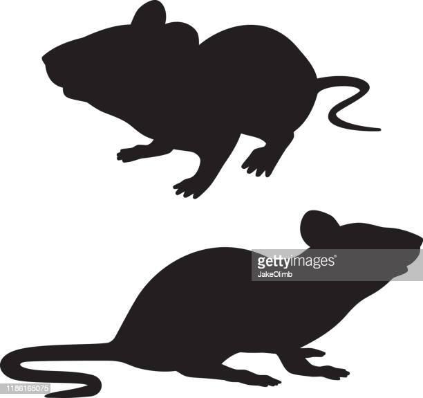 rat silhouettes - rat stock illustrations