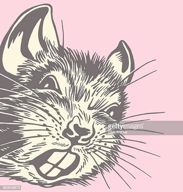 rat - gerbil stock illustrations