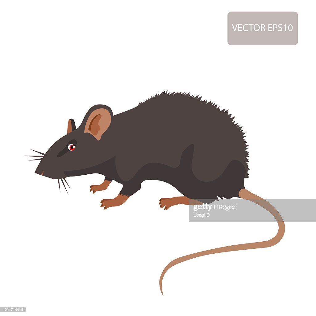 Rat Vector. Rat Isolated On White Background.