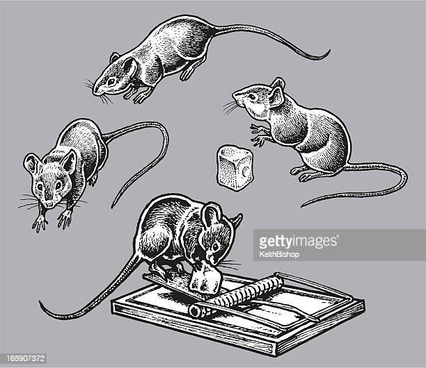 rats or mice - rodents, pests - rat stock illustrations, clip art, cartoons, & icons