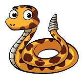 Rattle snake on white background