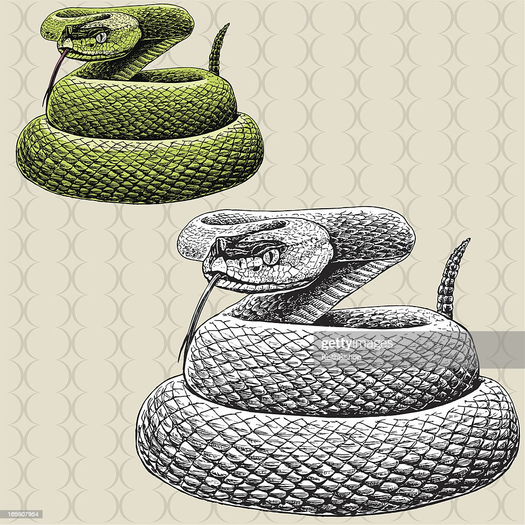 Rattlesnake Hissing - Snake