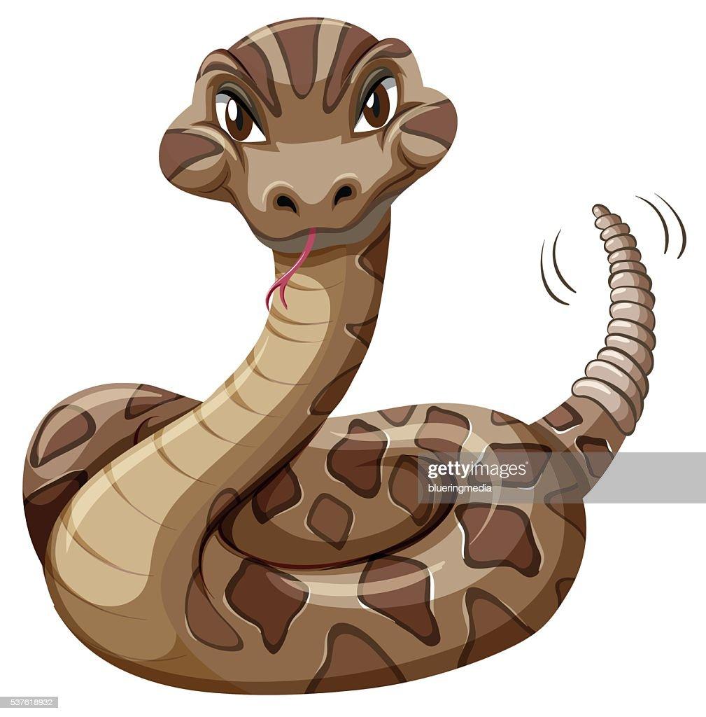 Rattlesnake on white background