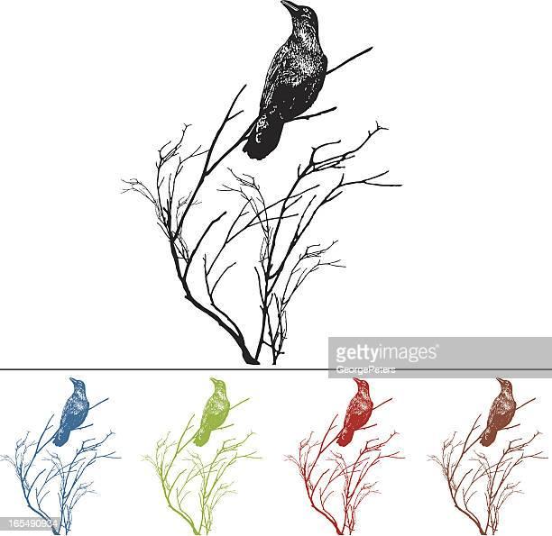 ilustraciones, imágenes clip art, dibujos animados e iconos de stock de raven en una rama elemento de diseño - cuervo