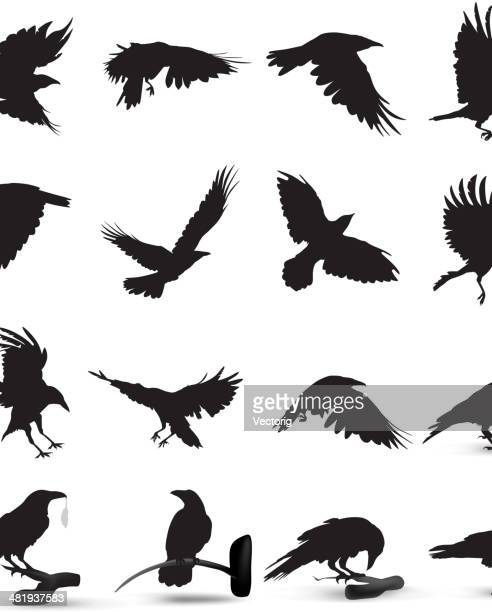 raven silhouette - crow stock illustrations